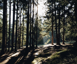 amazing, atmosphere, and forest image