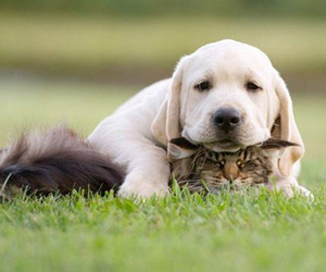 awesome, cat, and puppie image