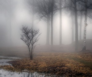 misty and nature image