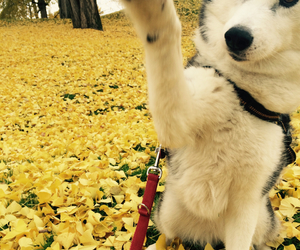 autumn, dog, and doggy image