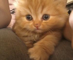adorable, animals, and baby animal image