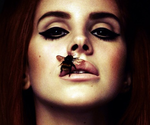 bee, eyes, and lana del rey image