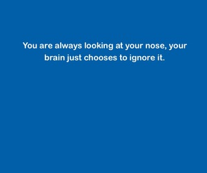 blue, brain, and fact image