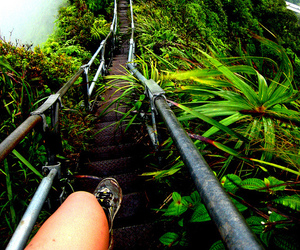 jungle, nature, and travel image