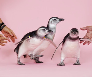penguin, cute, and pink image