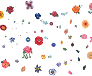 flowers and transparent image
