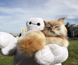 baymax and cat image