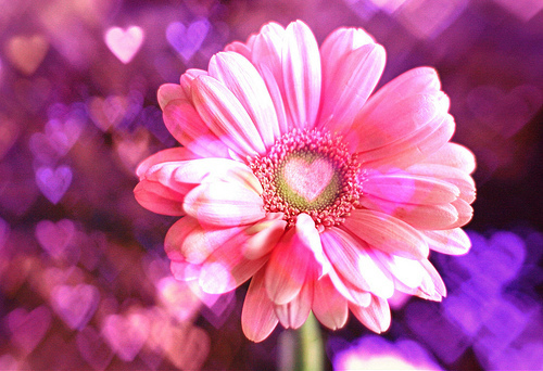 Cute flower heart petal pink inspiring picture on favim mightylinksfo