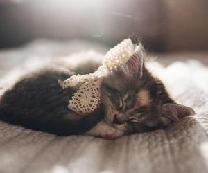 cat, sleep, and cute image
