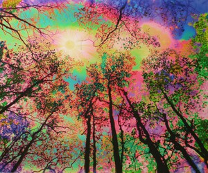 trees, colorful, and colors image