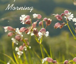 good morning, smile, and wishes image