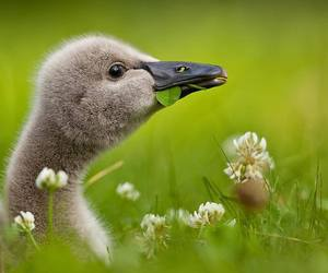 animal, duck, and nature image