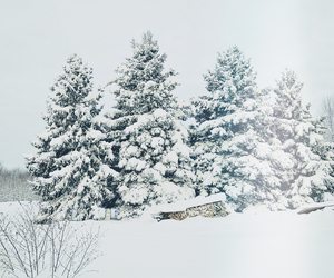 christmas, cold, and nature image