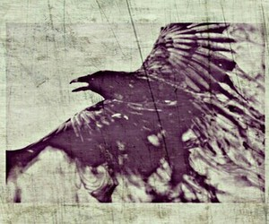 crow, vintage, and flower image