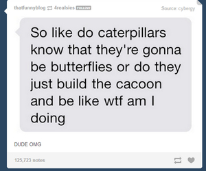 tumblr, funny, and butterfly image