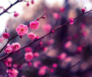 blooming, floral, and flowers image