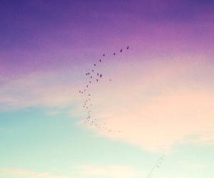 amazing, beautiful, and birds image