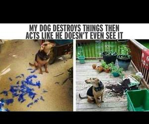 dog, see, and acts image