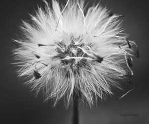 indie, black and white, and flowers image