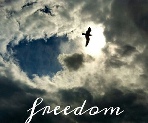 bird, indie, and freedom image