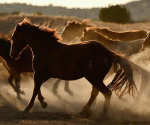 horse and wild image