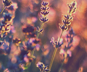 meadow, summer, and sunset image