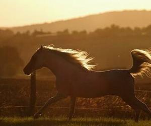 beautiful, horse, and wild image