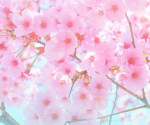 asian, cherry, and flower image
