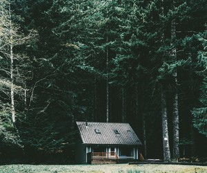 forest, home, and house image