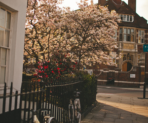 flowers, tree, and city image