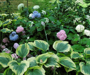 flowers, garden, and green image