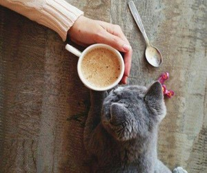 cat, coffee, and animal image
