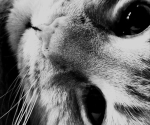 cat, black and white, and cute image