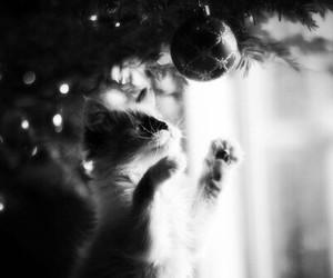 cute, cat, and christmas image