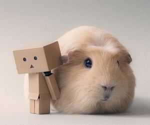 hamster, love, and life image