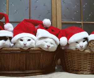 cat, christmas, and gif image