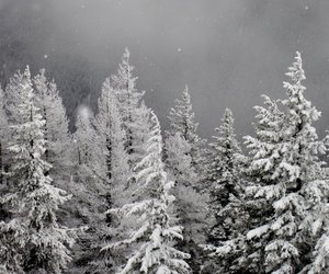 fog, winter, and forest image