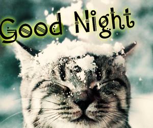 cat, night, and snow image