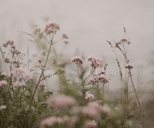 delicate, flowers, and fog image
