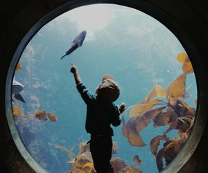 fish, child, and aquarium image