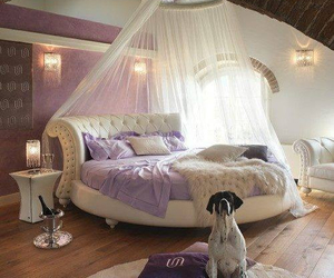 bedroom, bed, and dog image