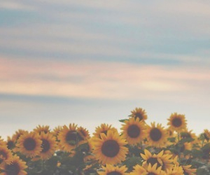 flowers, love, and girasol image