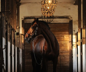 horse and stable image