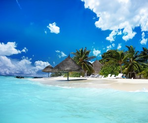 beach, tropical, and blue image