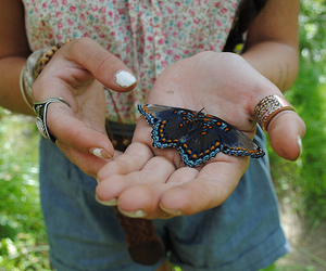 butterfly, girl, and wonderful image