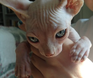 beautiful, kitten, and cat image