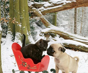 cat, pug, and friends image