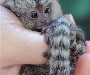 baby animals and cute image