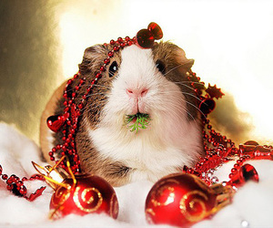 christmas, cute, and animal image