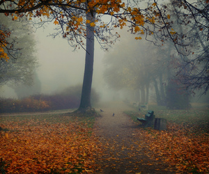 fog, inspiration, and autumn image